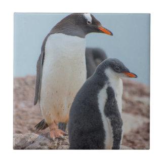 Die Antarktis. Neko Hafen. Gentoo Pinguin 3 Fliese