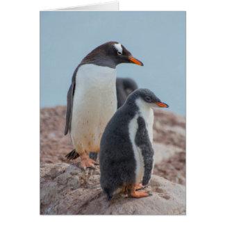 Die Antarktis. Neko Hafen. Gentoo Pinguin 3 Karte