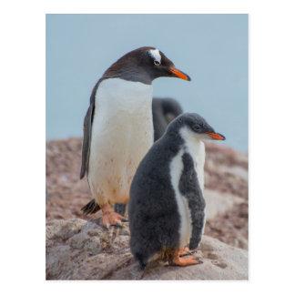 Die Antarktis. Neko Hafen. Gentoo Pinguin 3 Postkarte