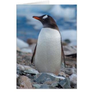 Die Antarktis. Neko Hafen. Gentoo Pinguin Karte