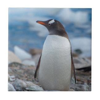 Die Antarktis. Neko Hafen. Gentoo Pinguin Keramikfliese