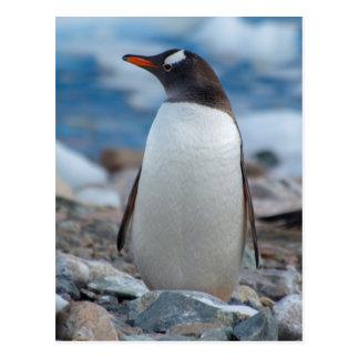 Die Antarktis. Neko Hafen. Gentoo Pinguin Postkarte