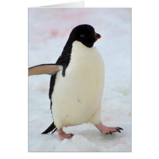 Die Antarktis. Petermann Insel. Adelie-Pinguin Karte