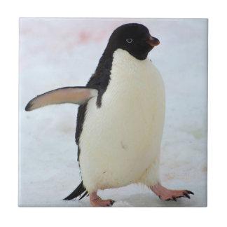 Die Antarktis. Petermann Insel. Adelie-Pinguin Keramikfliese