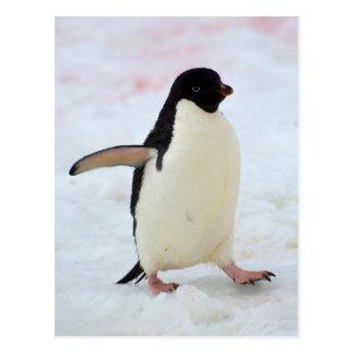 Die Antarktis. Petermann Insel. Adelie-Pinguin Postkarte