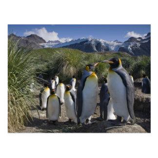 Die Antarktis, Südgeorgia-Insel Großbritannien), Postkarte