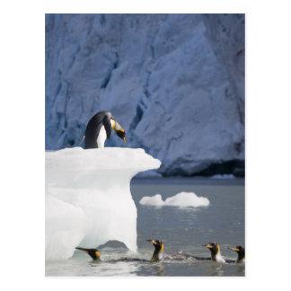 Die Antarktis, Südgeorgia-Insel (Großbritannien), Postkarte