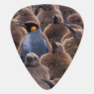 Die Antarktis, Südgeorgia-Insel, König-Pinguine Plektron