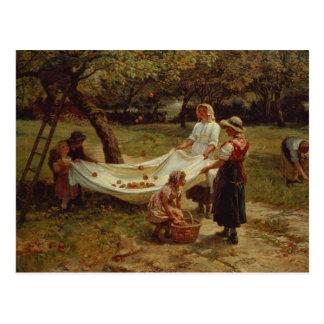 Die Apple-Sammler, 1880 Postkarte