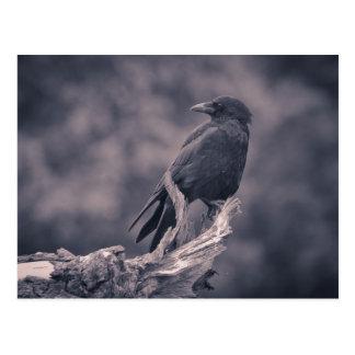 Die aufpassende Krähe Postkarte