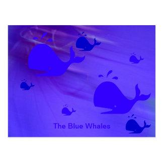 Die Blauwale Postkarte