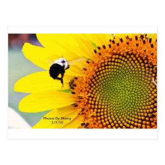 Die Blumen-Garten-Reihe des Sherrys Postkarte