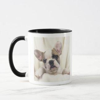 Die Bulldogge, häufig genannt die englische Tasse