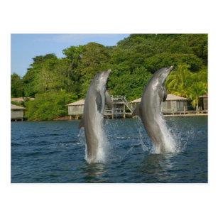 Ansichtskarte: Grosse Tümmler 3 -D Honduras Bottlenose Dolphins