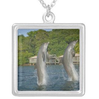 Die Delphine springend, Roatan, Bucht-Inseln, Versilberte Kette