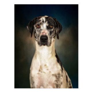 Die Deutsche Dogge Postkarte