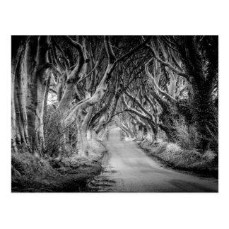 Die Dunkelheits-Hecken in Black&White Postkarte