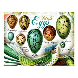 Die Eier der bunten Vögel Postkarte