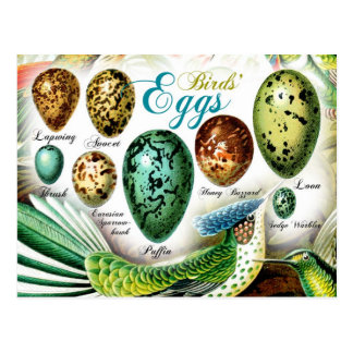Die Eier der bunten Vögel Postkarten