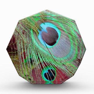 Die flüssige Feder des Pfaus des blauen Auges Acryl Auszeichnung