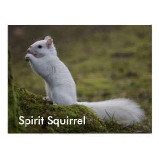 Die Geist-Eichhörnchen des Westens Postkarte