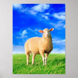 Die goldenen Schafe Poster