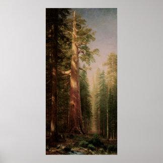 Die großen Bäume, Mariposa Waldung, CA durch Poster