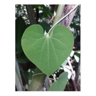Die grüne Herz-Postkarte Postkarte