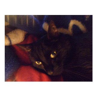 Die hübscheste Katze in der Welt Postkarte