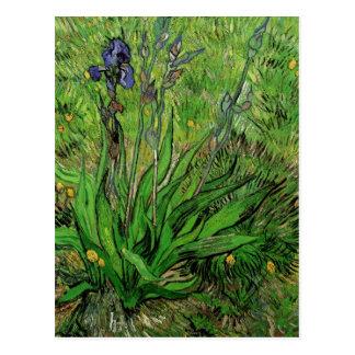 Die Iris durch Vincent van Gogh Postkarte