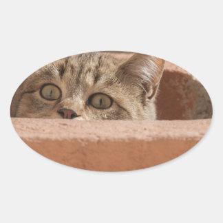 Die Katzenaugen-Aufmerksamkeits-Wildkatze Ovaler Aufkleber