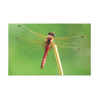Die Libelle Leinwanddruck