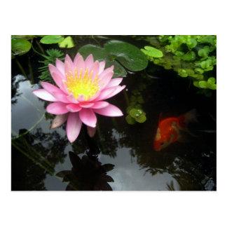 Die Lilie und der Goldfisch Postkarte