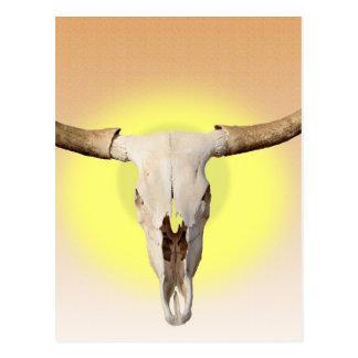 Die Longhorns Postkarte