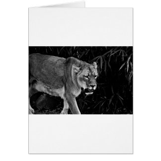 Die Löwin Karte