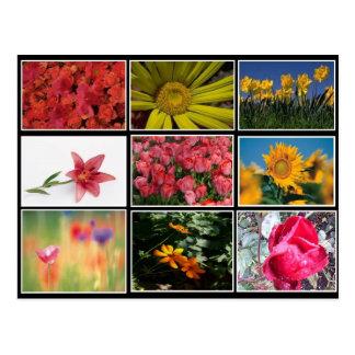 Die meiste schöne Blumen-Collagen-Postkarte Postkarte