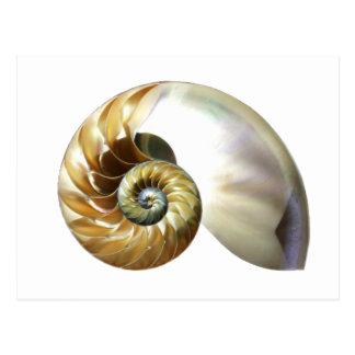 Die nautilus-Muschel Postkarte