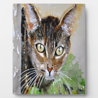 Die neugierige Tabby-Katze Fotoplatte