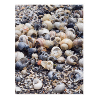 Die Oberfläche der Seeküste mit Postkarte