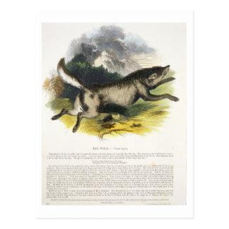 Die pädagogische Illustrations-PU des Wolfs (Canis Postkarte