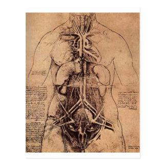 Die Prinziporgane und das Gefäß und Urino-genita Postkarte