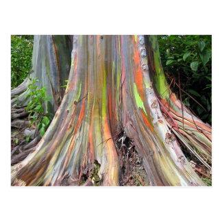 Die Regenbogen-Eukalyptus-Baum-Produkte Postkarte