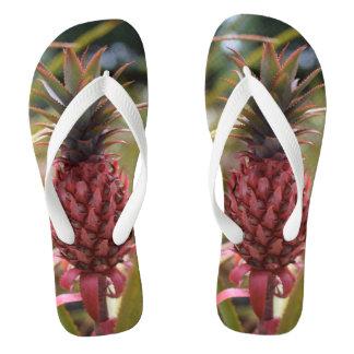 Die rosa Ananas drehen Reinfälle um Flip Flops