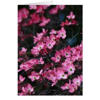 Die rosa Blume des Hartriegel-Baums Karte