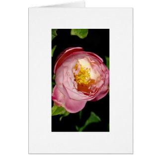 Die Rose Karte