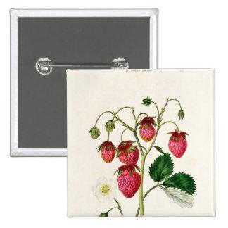 Die Roseberry Erdbeere, graviert durch Watte Quadratischer Button 5,1 Cm