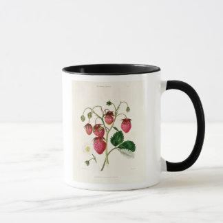 Die Roseberry Erdbeere, graviert durch Watte Tasse