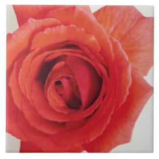 Die Rote Rose der Mammas Keramikfliese