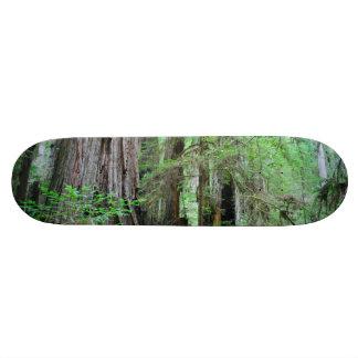 Die Rothölzer - Mammutbaum 19,1 Cm Old School Skateboard Deck