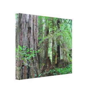 Die Rothölzer - Mammutbaum Leinwanddruck